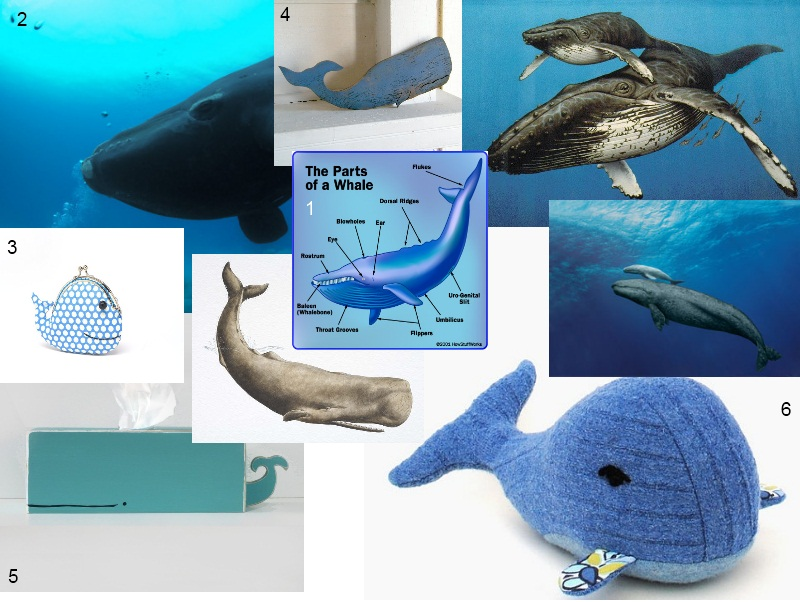 All About Whales |